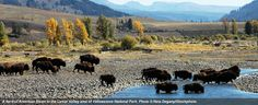 "Get the Big Picture on Bison on ""Independent Lens"" This Week"