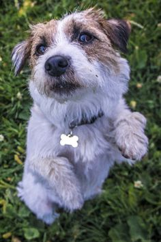 Milli can beg like a teddy! Dogs, Cute, Animals, Animales, Animaux, Pet Dogs, Kawaii, Doggies, Animal