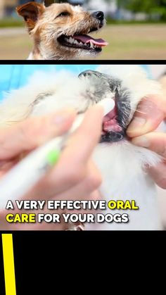 Dog Care Tips, Pet Care, Dog Dental Care, Dog Toothpaste, Pet Dogs, Pets, Dog Teeth, Dog Items, Teeth Cleaning