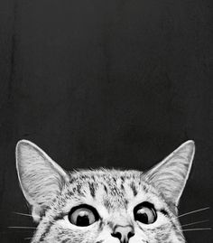 Hehe silly kitty peeking over the edge | Black & white art and home decor