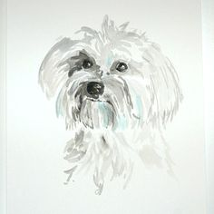 Havanese-  so cute, so naughty! I need another!