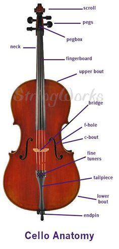 Anatomy of a Violin, Viola, and Cello (Parts Diagram) – Musical instruments Cello Art, Bass Cello, Cello Music, Piano Sheet Music, Music Songs, Viola Instrument, Cello Lessons, Electric Cello, Music Tattoos