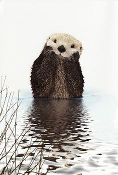 I've seen a lot of cute creatures. I mean a lot. But I don't believe I've seen anything cuter than this otter pic. Maybe AS cute, but not cuter. Cute Creatures, Beautiful Creatures, Animals Beautiful, Beautiful Smile, Nature Animals, Animals And Pets, Animals Photos, Wild Animals, Cute Animal Pictures