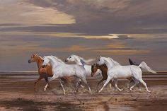 Welcome to Arabian Fine Art oil painting by Peter Smith Sunlight
