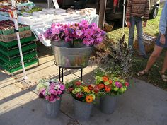 Cosmos and Zinnias at the Goderich Farmers Market, downtown Goderich Ontario.