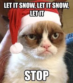grumpy cat christmas pics | Let it snow | Grumpy Cat Christmas