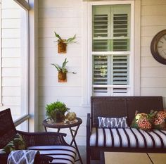 Screened in porch, nothing better! So cozy!!! Staghorn ferns and succulents, Chiangmai dragon