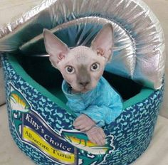 Pet Clothes Kitten Sun Protection Sphynx Cat or Dog Clothes - Long Sleeved Turquoise - Safe Sunscreen Shirt to Help Prevent Cancer - SPF 50 by SimplySphynx