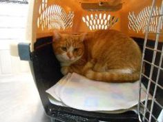 215 Best Adoptable Pets At Franklin County Humane Society