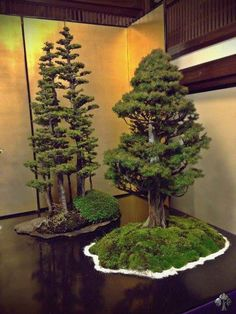 Two great bonsai trees, one of which a stunning Yose-Ue (forest style).