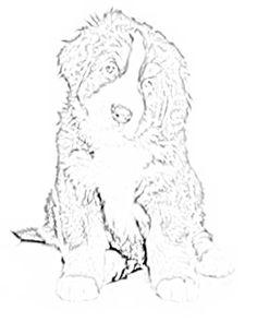 How To Draw Newfoundland Dogs