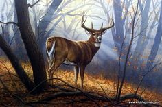 "A buck stands alone deep in the forest as the sun beams through the trees straight on him. This print is signed and numbered and is available unframed in an image size of 25.5""x17"""