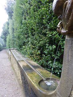 gutter fountain against a tall hedge