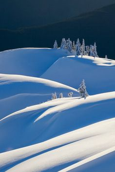 Winter wonderland ~