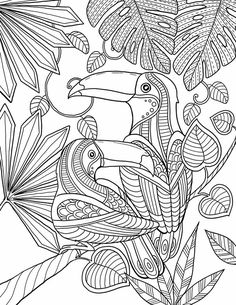 Toucan Couple | Free Printable Adult Coloring Page | Tropical Jungle Birds
