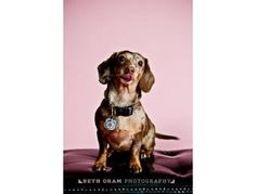 You can bid on a Beth Oram Pet Photography session in the Furever Dachshund Rescue Auction starting Monday, November 12th. Feel free to preview all the wonderful items. There is something for everyone! You can also donate...contact fundraising@fureverdachshundrescue.org to donate