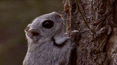 Liito-orava Bird, Animals, Pray, Flying Squirrel, Animales, Animaux, Birds, Animal Memes, Animal