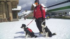 Our Avalanche Dogs are enjoying the last few beautiful days of the season! (Our patrollers are too!) Here's a clip from ...