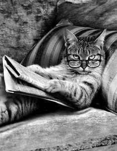 Oh je lis alors faite moins de bruit