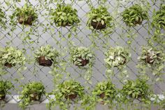 9-vertical-garden When you have a green thumb, even a chain-link fence can become a flora-inspired work of art. While not often thought of as an art canvas, chain link is perfect for hanging plants and flowers - every link provides another place in which to hang a flower pot!