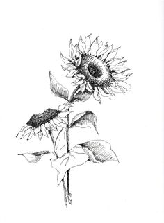 Sunflower art black and white sketches original pen and ink drawings flower sketch art floral pictures botanical illustration decor Sunflower tattoo Sunflower Sketches, Sunflower Drawing, Sunflower Art, Sunflower Seeds, Art And Illustration, Botanical Illustration Black And White, Sunflower Illustration, Watercolor Illustration, Stylo Art