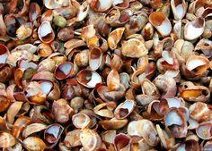 New England seashells