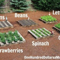 Old wooden pallets are fantastic for garden DIY projects. They are easy to get hold of, cheap, and rustic looking so being outside won't harm their charm. Using the wooden frames is a great way to make individual growing plots for different fruits and vegetables. They're a wonderful way to...