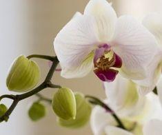 Ecco alcuni trucchi e facili consigli per scoprire come curare le orchidee tutto l'anno e avere numerose fioriture prolungate nel tempo