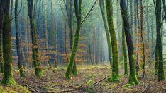 Psychic White Magic Spells in Lincolnshire Forest Landscape, Landscape Walls, Medan, Wabi Sabi, Photo Café, White Magic Spells, Vida Natural, Powerful Love Spells, Forest Pictures