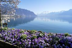 Montreux, Switzerland (by Maitri) - All things Europe Beautiful Places To Visit, Wonderful Places, Travel Pictures, Travel Photos, Places To Travel, Places To See, Voyage Europe, Vacation Spots, Beautiful Landscapes