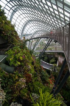 The Cloud Forest - walking bridge at the Gardens by the Bay, Singapore