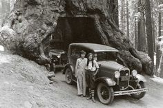 Western adventure for Letha Smith (right) and her friend Helen included driving through a sequoia in their Model A.
