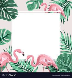 Exotic tropical border frame template with bright green jungle palm tree monstera leaves and pink flamingo birds. Pink Flamingos Birds, Flamingo Bird, Flamingo Birthday, Flamingo Party, Dinosaur Birthday, Tree Monster, Birthday Banner Design, Tropical Frames, Poster Design Layout