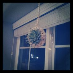 crocheted air plant hanger made of rope. made by me. @tif_lyn on instagram.