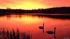 Loughbrickland Lake, County Down, Ireland.