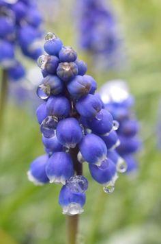 Go check out my blog post!    #flower #spring #photograhy #nature #blogpost #artsy #rain #raindrops #drop