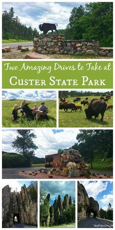 If you're heading to Custer State Park, South Dakota, here are two amazing drives to take through the park to see amazing scenery and tons of wildlife!