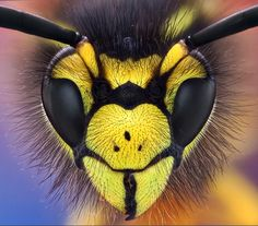wasp Macro Photography