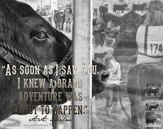 This so tru with my third show steer -kw Farm Life Quotes, Cow Quotes, Animal Quotes, Farmer Quotes, Livestock Judging, Livestock Farming, Showing Livestock, Cattle Barn, Show Cattle