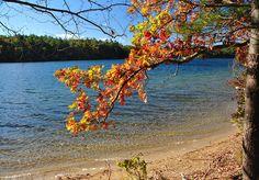 Autumn at Walden Pond