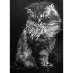 Pencil drawing- Paul Lung