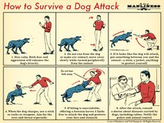 How to Survive a Dog Attack - Art of Manliness Survival Life Hacks, Survival Food, Outdoor Survival, Survival Prepping, Survival Skills, Survival Quotes, Survival School, Survival Gadgets, Survival Stuff