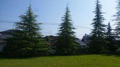 <P>庭から見える夏の色。杉はいつもと変わらないのに夏は違って見える。