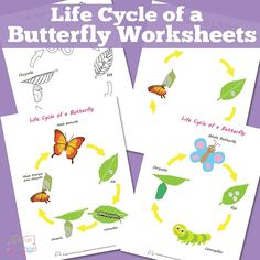 Life-Cycle-of-a-Butterfly-Worksheets