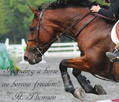 In riding a horse we borrow freedom. ~H. Thomson. A neat quote that ally explains the freedom you do feel.