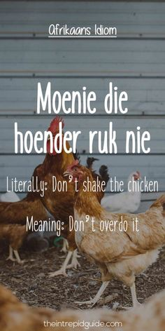 Afrikaans is one one of the easiest languages to learn and make you laugh. Translating Afrikaans to English, these Afrikaans idioms will make you giggle. Africa Quotes, Afrikaans Language, Collective Nouns, Afrikaanse Quotes, Idioms, Qoutes, Bible Quotes, True Words, Hilarious