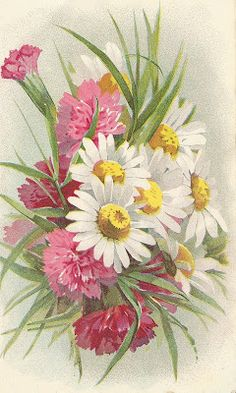 Carnations and daisies ~ Victorian graphic