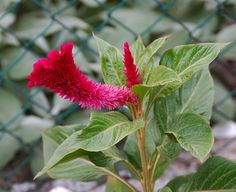 A flower?