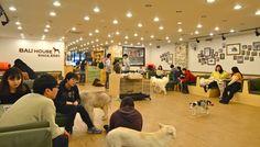 Bau House Dog Cafe in Seoul, South Korea