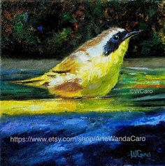 Artists Of Texas Contemporary Paintings and Art: Common Yellow Throat Warbler by Wanda Caro Great Paintings, Paintings For Sale, Beautiful Paintings, Original Paintings, Oil Paintings, Blue Bird Art, Bird Wall Art, Square Canvas, Oil Painting For Sale